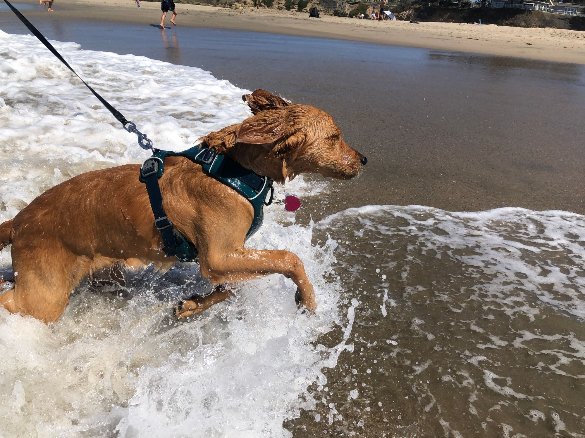 Adventure Day at the Beach